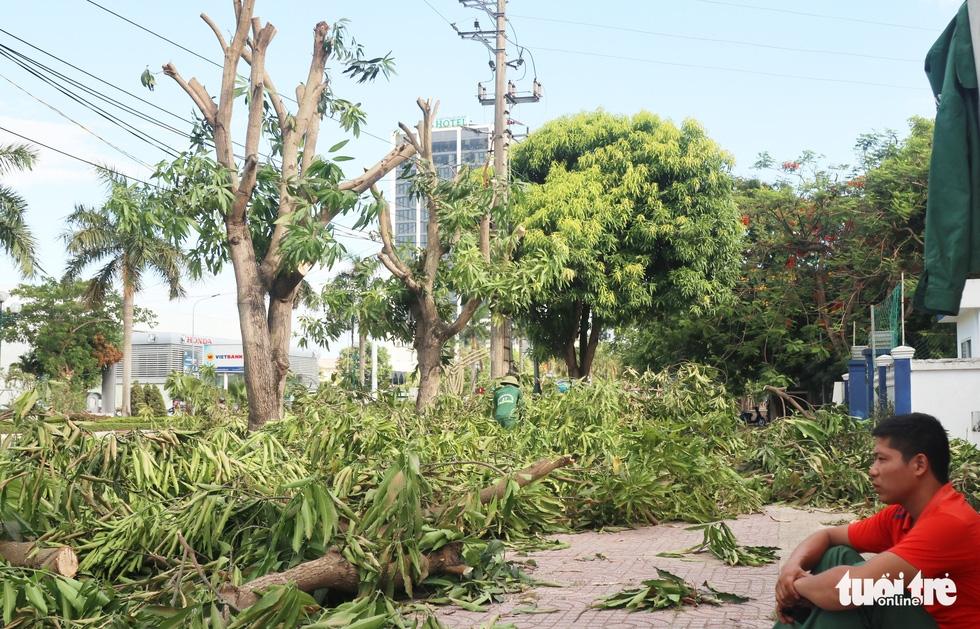 Hàng loạt cây xanh thành phố Vinh bị vặt trụi trong nắng nóng 40 độ - Ảnh 6.