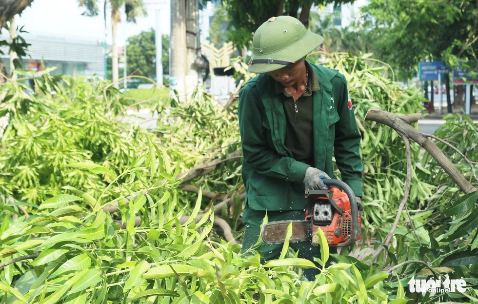 Hàng loạt cây xanh thành phố Vinh bị vặt trụi trong nắng nóng 40 độ - Ảnh 8.