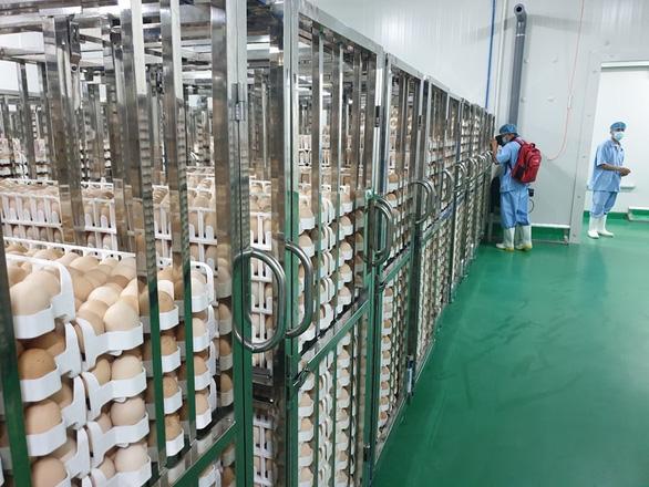 Việt Nam có nhà máy chế biến thịt gà xuất khẩu lớn nhất Đông Nam Á - Ảnh 1.