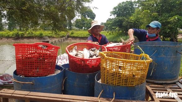 Người nuôi cá tra 'tố' doanh nghiệp nạo vét thông luồng gây sạt lở nặng - Ảnh 6.