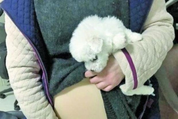 Sinh viên Trung Quốc bị phạt vì nhét chó vào bầu giả lên máy bay - Ảnh 1.