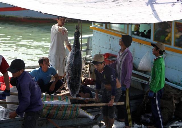Ngư dân đưa cá ngừ đại dương từ hầm cấp đông lên thuyền