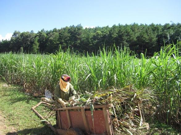 5 quốc gia bị Việt Nam điều tra lẩn tránh thuế sản phẩm đường mía - Ảnh 1.