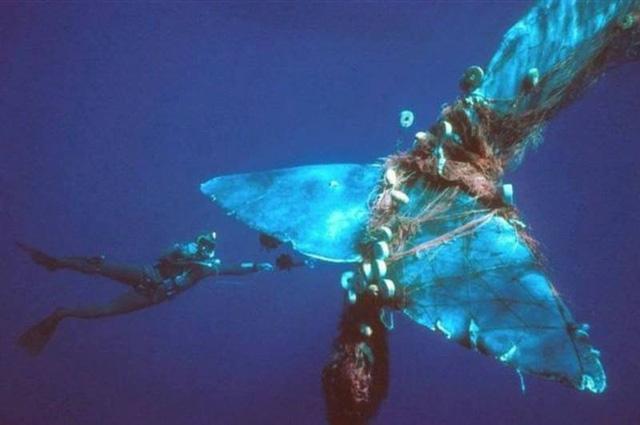 """Chính rác thải của con người đã trở thành """"cái bẫy"""" chết người với sinh vật biển. Trong ảnh là đuôi của một chú cá voi bị vướng vào lưới đánh cá cũ."""