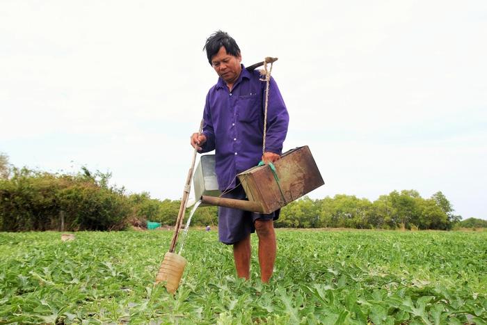 Thiếu nước ngọt, nông dân miền Tây tưới dưa hấu bằng phễu - Ảnh 2.