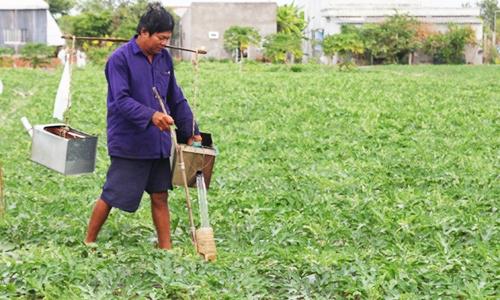 Nông dân tưới dưa bằng phễu vì giá nước đắt đỏ ở Bến Tre. Ảnh: Hoàng Nam.