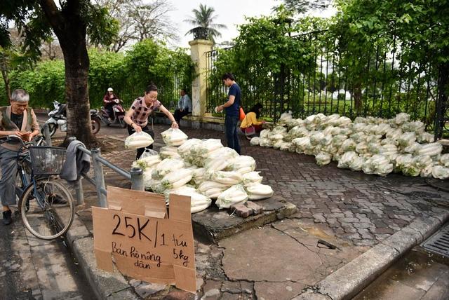 Sáng ngày 19/3, hơn 4 tấn củ cải được vận chuyển từ xã Tráng Việt (huyện Mê Linh) vào nội thành Hà Nội để bán trên hè phố khu vực công viên Thống Nhất trên phố Lê Duẩn, giúp những người làm nông đang gặp khó khăn trong việc tiêu thụ sản phẩm trồng được.
