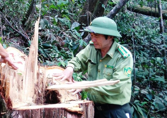 Quảng Nam kỷ luật lãnh đạo kiểm lâm vì vụ phá rừng Tiên Lãnh - Ảnh 2.