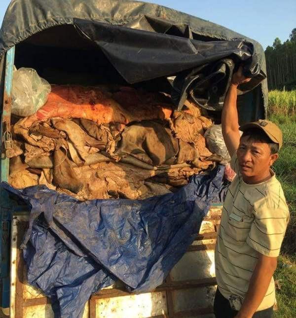 Xe tải chở số lượng da bò lớn đã bốc mùi thối nhưng chưa rõ nguồn gốc.