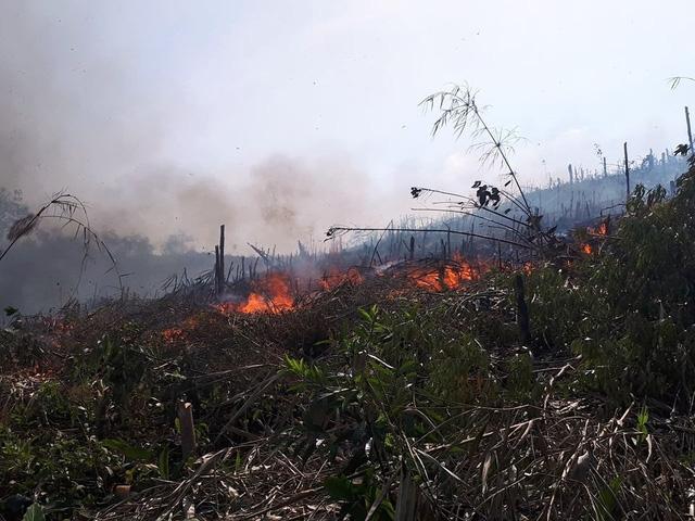 Tranh chấp đất dai dẳng, hàng chục hecta cao su bị đốt phá - Ảnh 1.