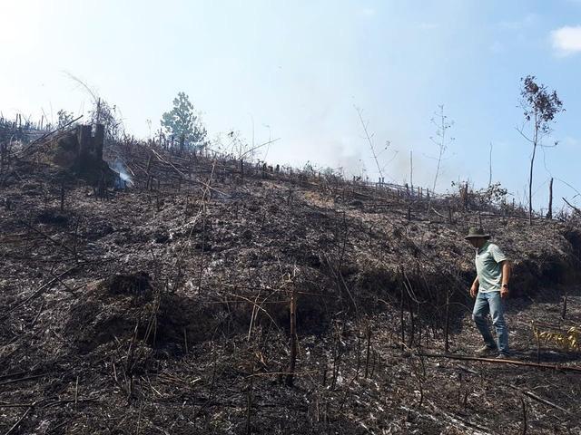 Tranh chấp đất dai dẳng, hàng chục hecta cao su bị đốt phá - Ảnh 2.