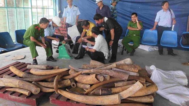Một vụ buôn lậu ngà voi bị cơ quan hải quan phát hiện