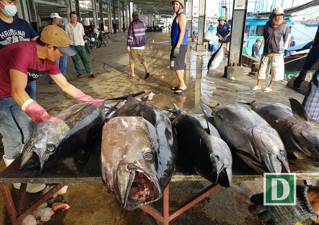 Cá ngừ đại dương được ngư dân Nha Trang (Khánh Hòa) khai thác tại Trường Sa, Nhà giàn DK1... vào đầu năm nay