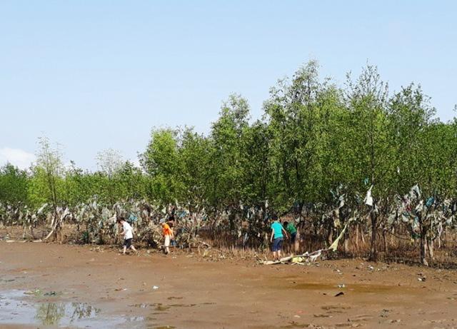 Được biết, hiện nay trên toàn xã Đa Lộc có hơn 400ha rừng phòng hộ ven biển.
