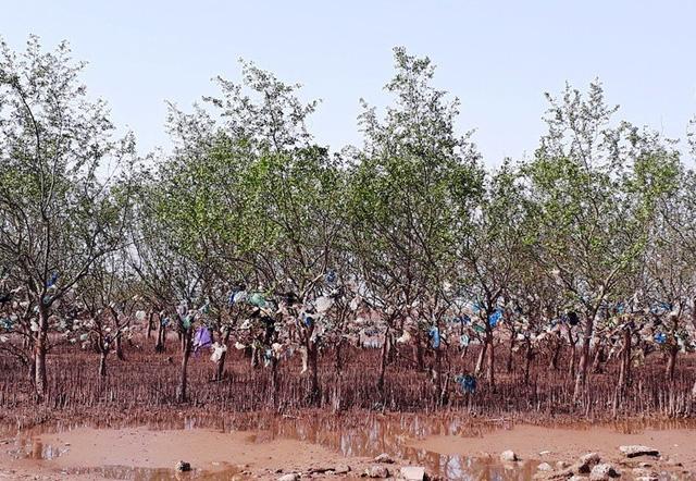 Để làm sạch được rác trên khu vực rừng phòng hộ là cả một vấn đề đối với chính quyền địa phương.