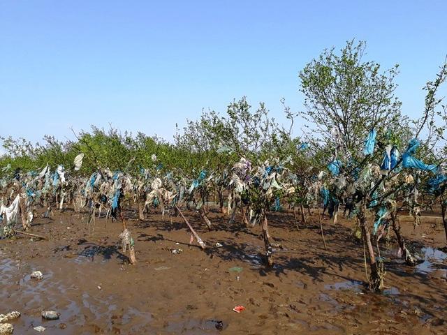 Trước thực trạng trên, chính quyền xã Đa Lộc đã thành lập ban chỉ đạo với các tổ môi trường xanh, phối hợp với Đoàn xã và đoàn trường THCS mỗi tuần đi dọn rác một lần. Tuy nhiên, các đoàn chỉ đi xử lý rác dọc bờ biển và trên đê kè, còn rác trên khu rừng phòng hộ rất khó xử lý, bởi vì ngày nào cũng có một lượng lớn rác theo thủy triều được đưa vào bờ.