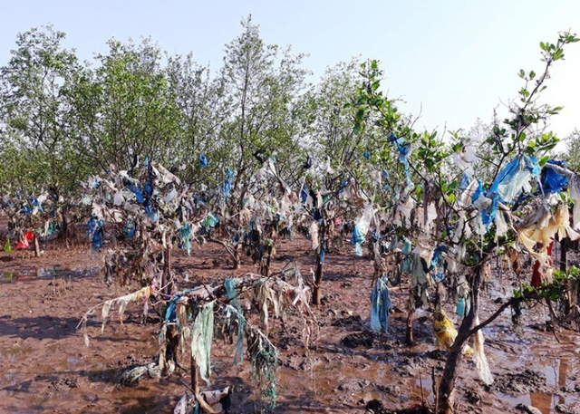 Thực trạng rác thải ngập tràn khu rừng phòng hộ đang rất báo động. Không chỉ ô nhiễm môi trường, rác thải đã tác động khiến nhiều cây rừng mới được trồng xuống bị chết khô.