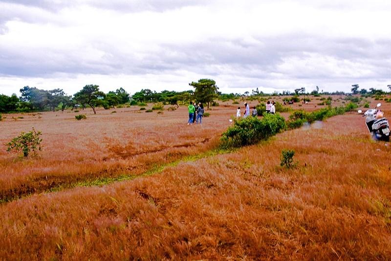 FLC xin làm sân golf trên đồi cỏ hồng ở Gia Lai - ảnh 1