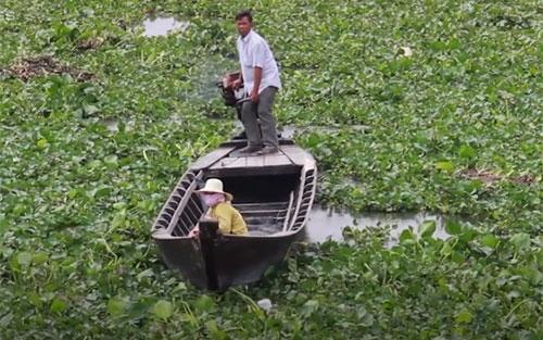 Lục bình phủ kín mặt nước khiến việc di chuyển người dân khó khăn.