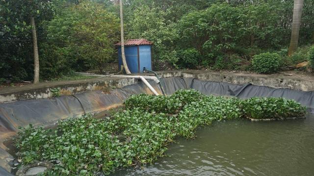 Nước từ phân bùn bể phốt sau khi được xử lý sẽ đưa ra bể chứa này để từ đó bơm ra môi trường.