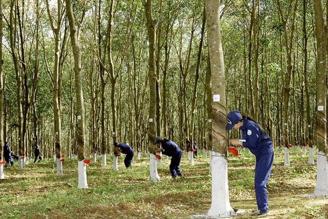 Vụ việc có dấu hiệu sai phạm trong hoạt động huy động và sử dụng vốn tại Công ty tài chính TNHH MTV Cao su Việt Nam.