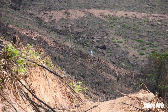 8 ha rừng phòng hộ Quảng Ninh bị chặt trụi trước mặt kiểm lâm - Ảnh 2.