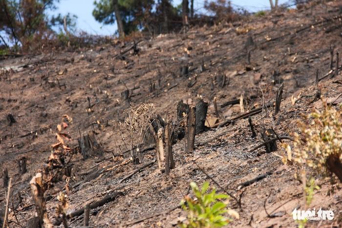 8 ha rừng phòng hộ Quảng Ninh bị chặt trụi trước mặt kiểm lâm - Ảnh 5.