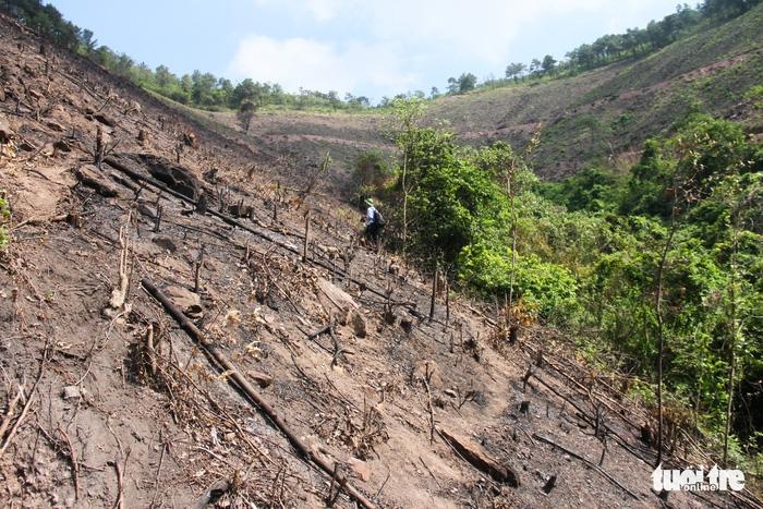 8 ha rừng phòng hộ Quảng Ninh bị chặt trụi trước mặt kiểm lâm - Ảnh 6.