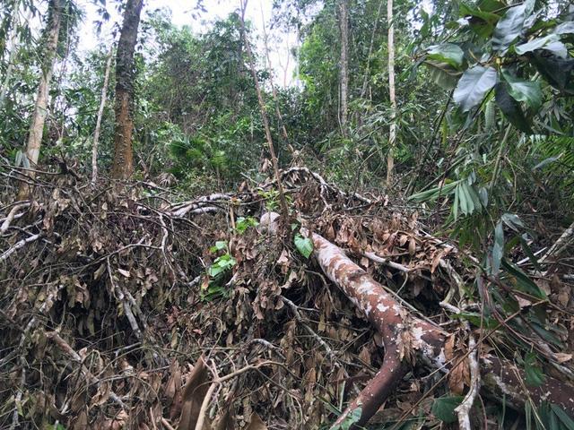 Người vi phạm đã bị xử phạt, dư luận trông chờ vào việc xử lý trách nhiệm trong công tác quản lý của chính quyền và ngành chức năng trong công tác bảo vệ rừng