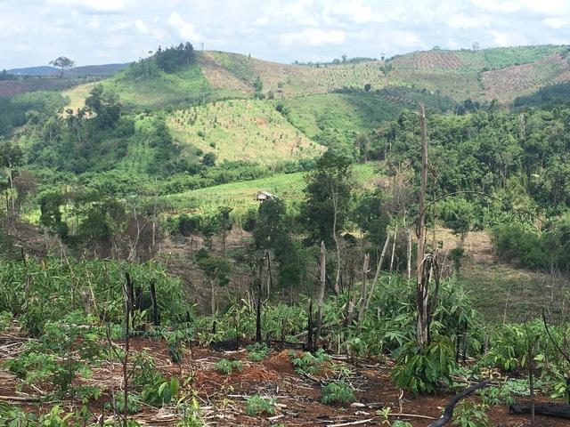 Hiện trường vụ phá rừng chỉ cách chốt bảo vệ rừng chưa đầy 15m.