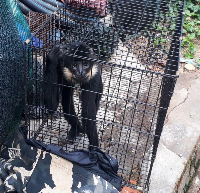 Khu du lịch thác Prenn Đà Lạt bị tố ngược đãi động vật - Ảnh 2.