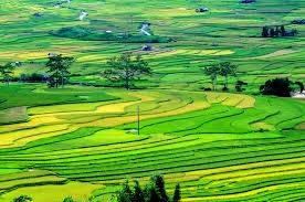 Chuyển mục đích sử dụng đất giữa các loại đất cùng nhóm thì có phải thông báo với cơ quan nhà nước có thẩm quyền?