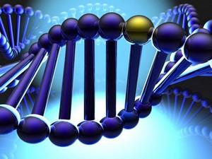 Cơ cấu của Hội đồng thẩm định hồ sơ đề nghị cấp Giấy phép tiếp cận nguồn gen để nghiên cứu vì mục đích thương mại