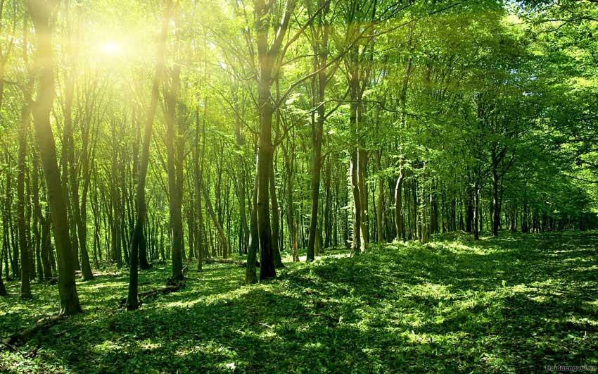 Ủy ban nhân dân cấp xã sử dụng nguồn kinh phí được cấp cho những hoạt động bảo vệ rừng nào?