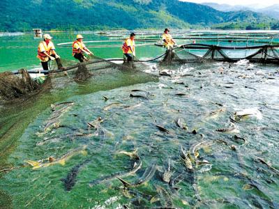 Lệ phí cấp giấy đăng ký công bố hợp quy vật tư nuôi trồng thủy sản nhập khẩu