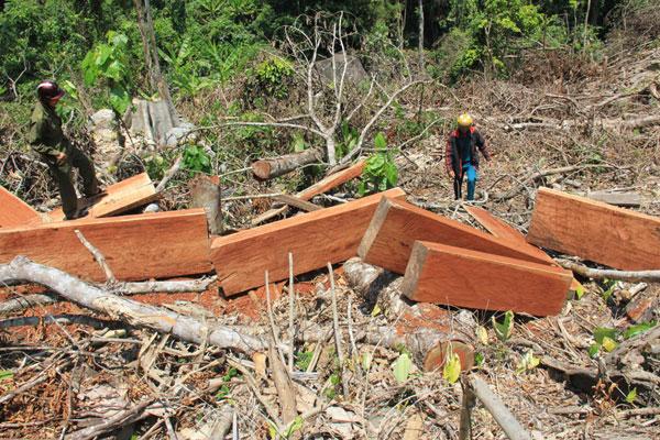 Mức phạt đối với hành vi khai thác 0,1 m3 gỗ rừng tự nhiên thuộc nhóm IIA?