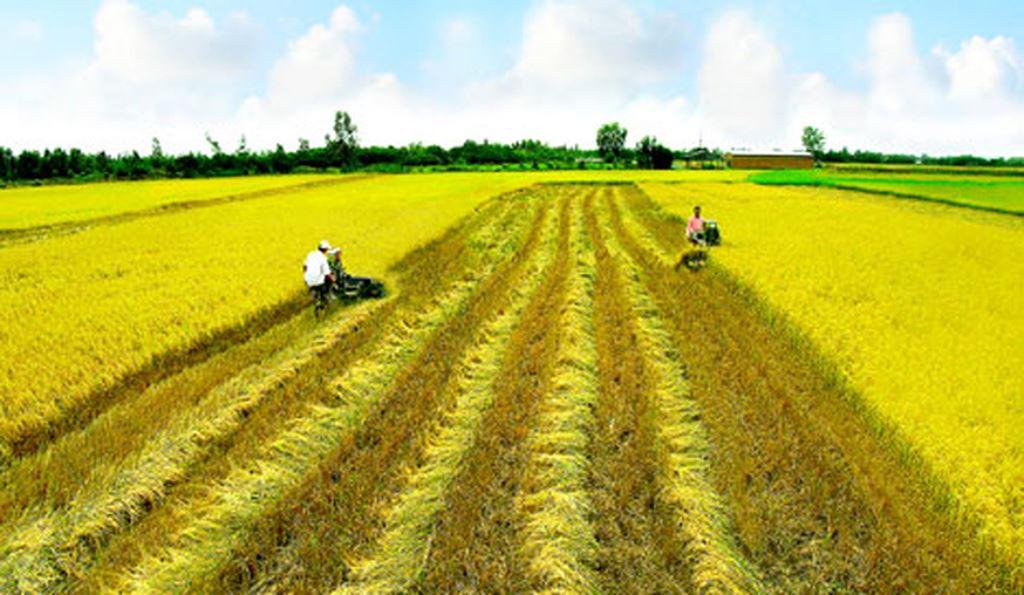 Cơ cấu, số lượng thành viên Hội đồng quản lý trong đơn vị sự nghiệp công lập thuộc ngành nông nghiệp