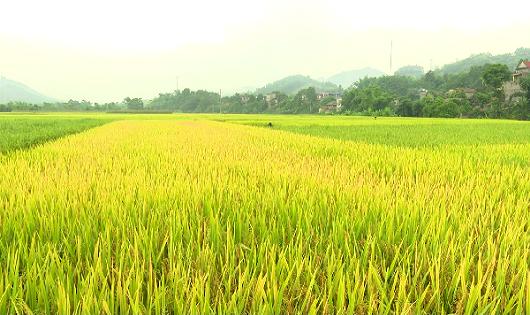 Công ty có được mua đất trồng lúa của hộ gia đình, cá nhân?