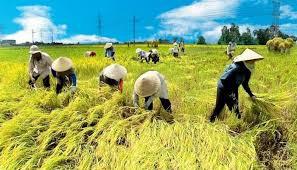Viên chức mua 200m2 đất trồng lúa được không?