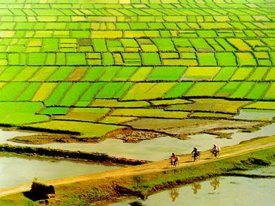 Nhà nước thu hồi đất nhưng tài sản gắn liền với đất không được bồi thường khi nào?