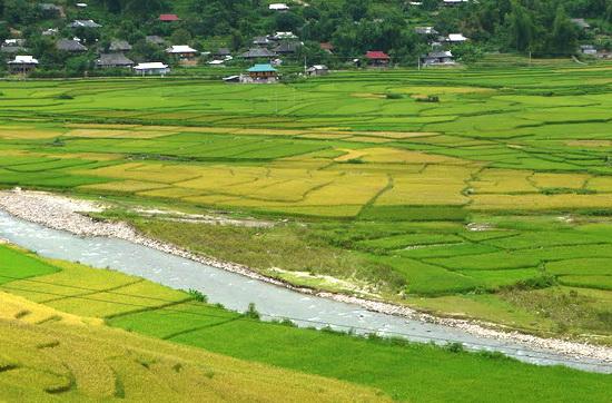 Tự ý chuyển 500 mét vuông đất trồng lúa sang đất trồng cây lâu năm bị xử phạt như thế nào?