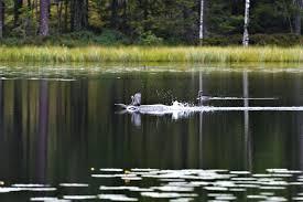 Hồ Bản Chất có mực nước lớn nhất là bao nhiêu?