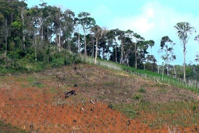 Tự ý chuyển mục đích sử dụng đất rừng phòng hộ sang đất trồng cây lâu năm mà không được cấp phép bị xử lý ra sao?