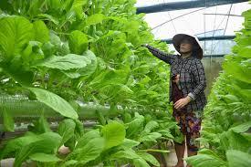 Có được xin chuyển mục đích sử dụng đất để trồng rau thủy canh?
