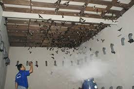 Cơ sở nuôi chim yến được quy định thế nào?