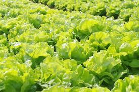 Giai đoạn khởi đầu quá trình phân tích nguy cơ dịch hại đối với vật thể thuộc diện kiểm dịch thực vật được quy định như thế nào?
