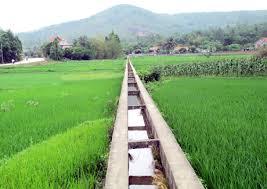 Điều kiện chuyển đất trồng lúa sang trồng cây hàng năm