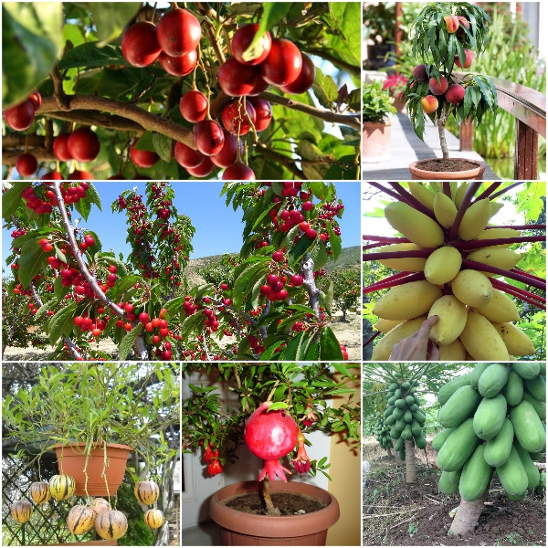 Đăng ký bảo hộ tên của giống cây trồng được quy định như thế nào?