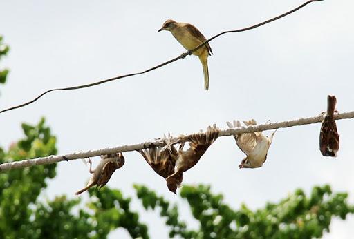 Sử dụng bẫy bắt chim trong rừng bị phạt bao nhiêu?