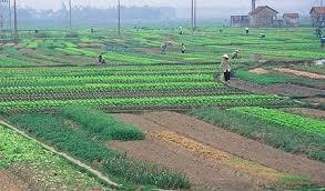 Cấp giấy chứng nhận quyền sử dụng đất nông nghiệp 2019